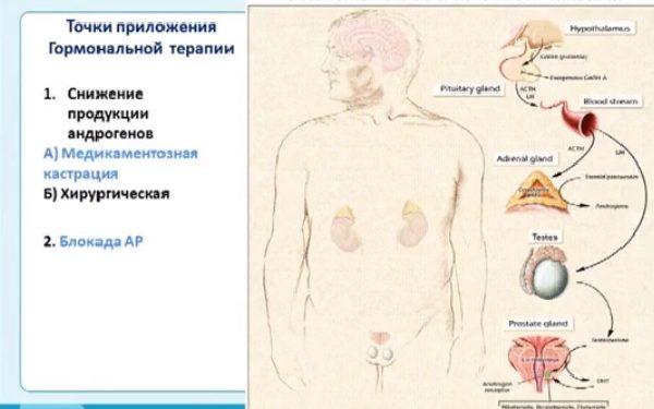 Точки приложения гармональной терапии